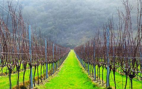 Buy wines from Dawe Wines, Bath Somerset.