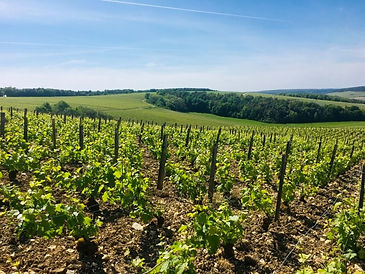 Rémy Massin Champagne | Dawe Wines