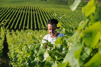 Antoine Chiquet | Dawe Wines