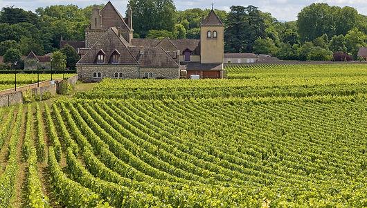 Pinot Noir wines from Dawe Wines