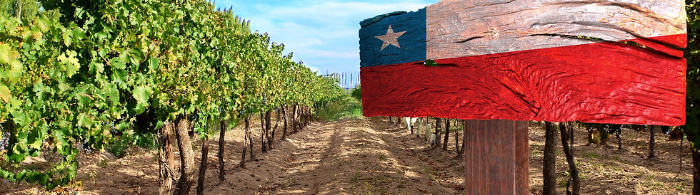 Exceptional Chilean wines from Dawe Wines, Bath Somerset UK.