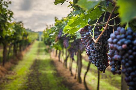 USA wines from Dawe Wines