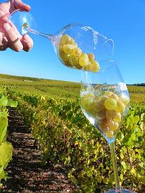 Roland Champion Champagne | Dawe Wines