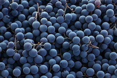 Dawe Wines, Bath Somerset.   Red wine grapes background.