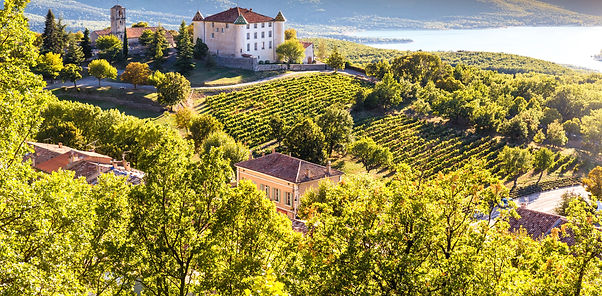 The best Provence wines and rosés from Bath Somerset's wine merchant, Dawe Wines.