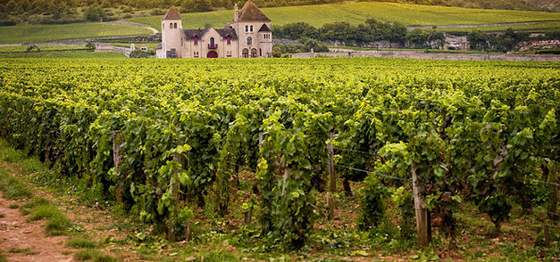 Beautiful Loire Valley wines, including sancerres available from Dawe Wines, Bath Somerset.