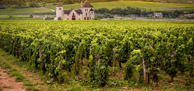 Burgundy wines available from Dawe Wines, Bath Somerset.