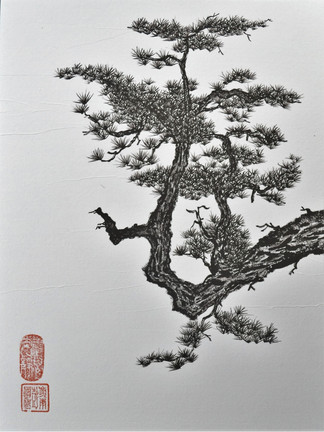 dragon conifer.jpg