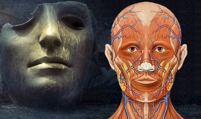 Understanding Maxillofacial Trauma