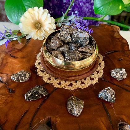 Turritella Agate Tumbled Stones