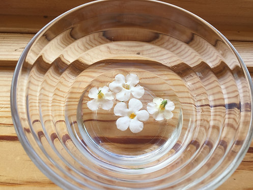 White Bacopa (Clearing)