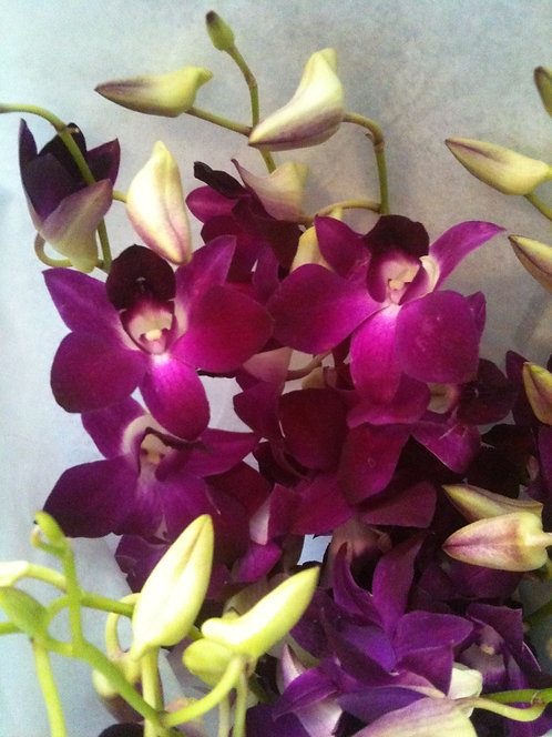 Magenta Orchid (Clear & True Expression)