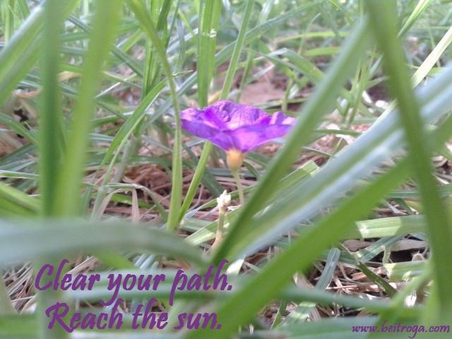 Clear your path.  Reach the sun..jpg
