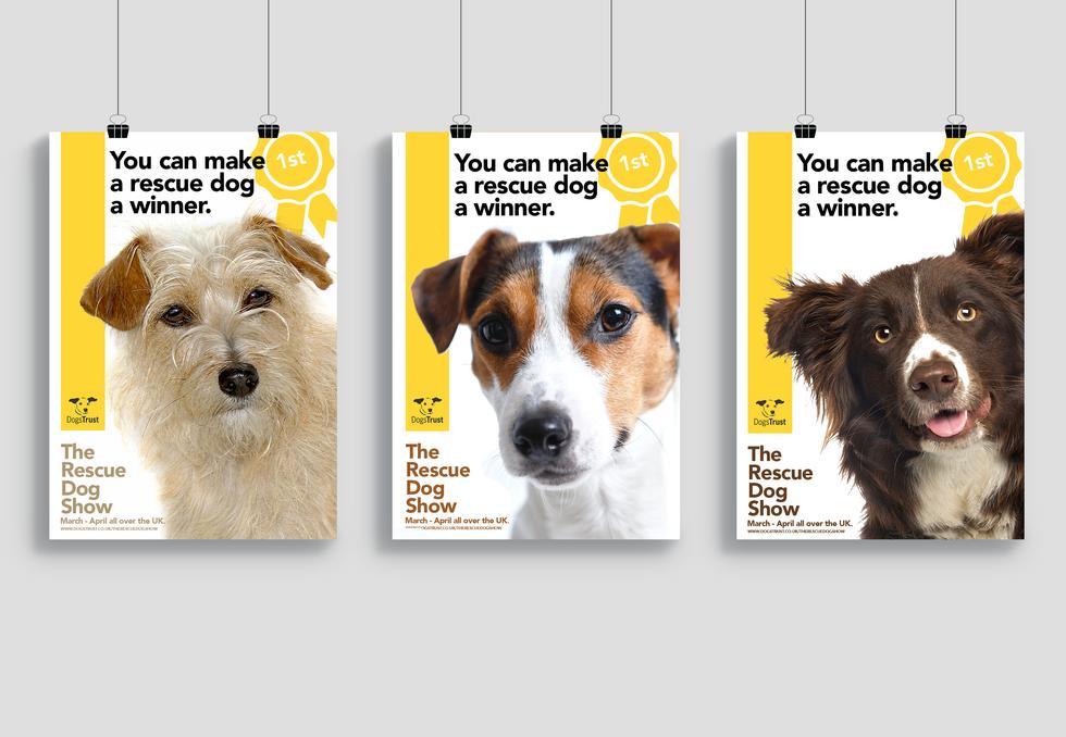 Designray dogs trust