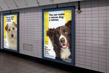 Designray Dogs Trust Poster