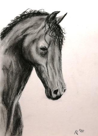 cavallo profilo