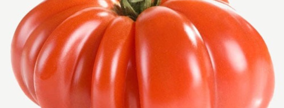 Costoluto Genevese Tomato, Indeterminate, 15 seeds