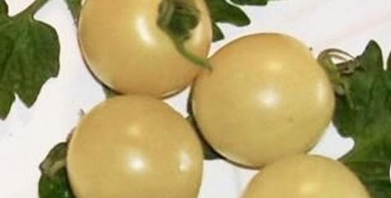 White Cherry Tomato, 10 seeds