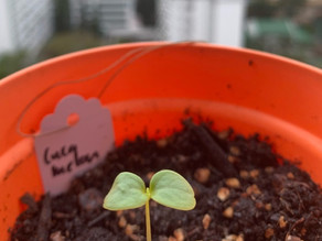 Tips for successful seed germination