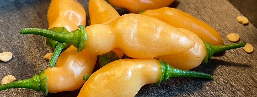 Golden Fatalli, 10 seeds