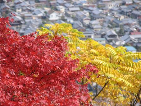 紅葉のきれいな季節になりました