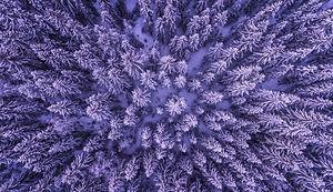 the-fractal-forest.jpg