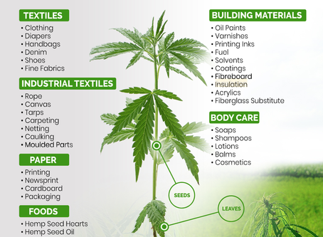 """What is Hemp? """"Hemp"""" is a term used to classify varieties of Cannabis that contain 0.3% or less THC"""