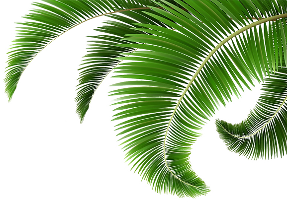 green-palm-tree-leaves.png