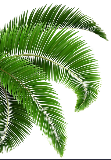 green-palm-tree-leaves-isolated-on-white