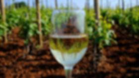 Posip Wine