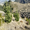 山の斜面に自生するダグラスファー(ベイマツ)の木
