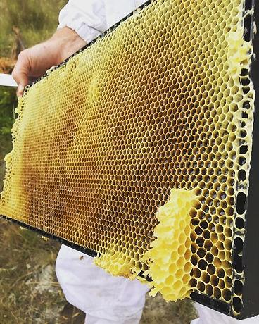 蜂の巣箱から取り出した巣枠