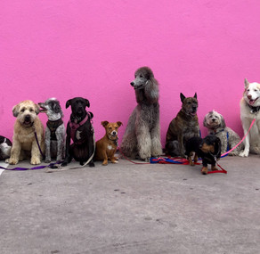 7 raças de cães SUPER independentes pra quem fica pouco tempo em casa