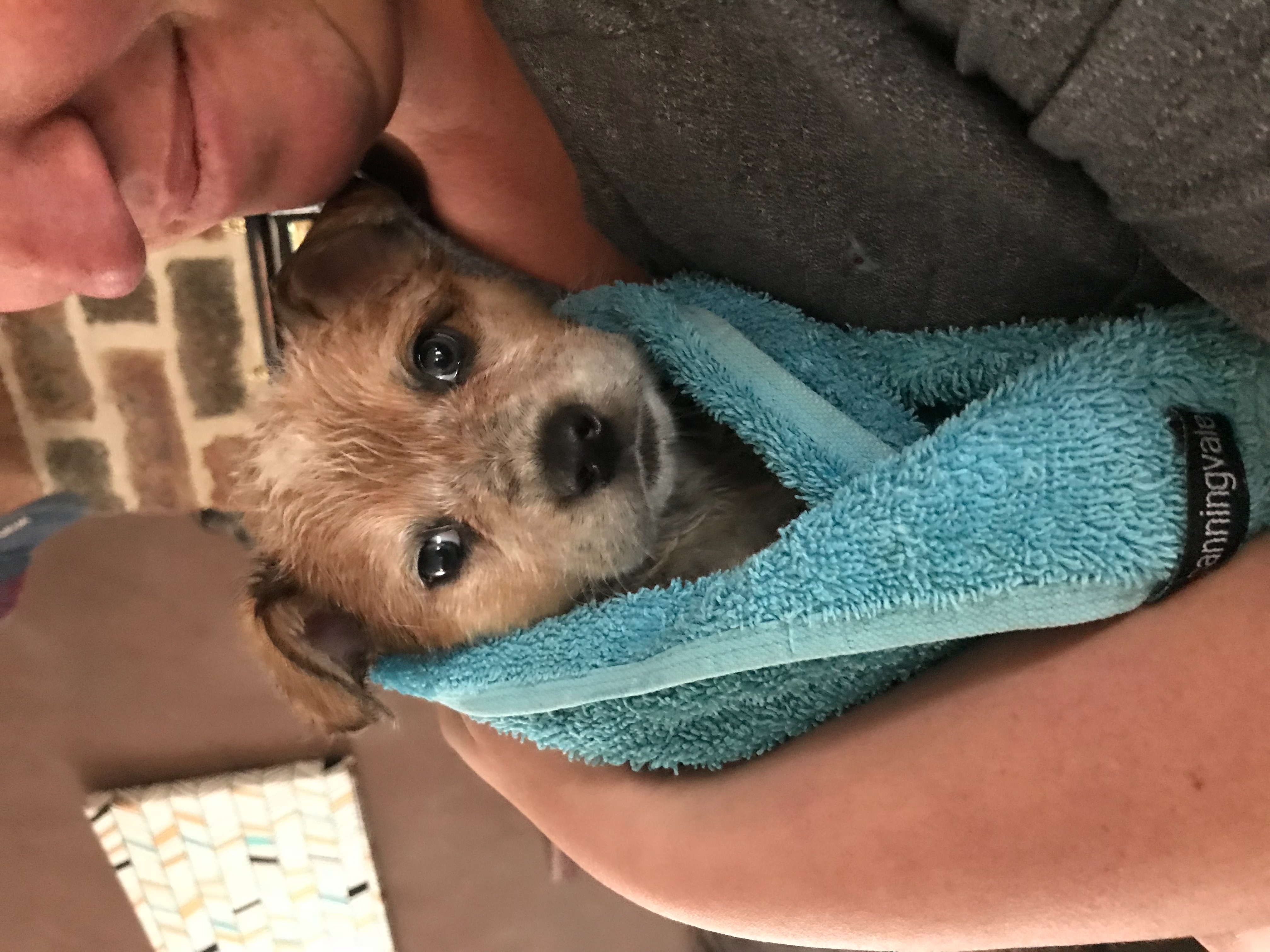 Puppy bath time is always fun