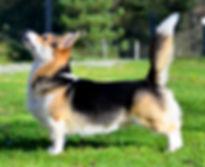 tails4.jpg