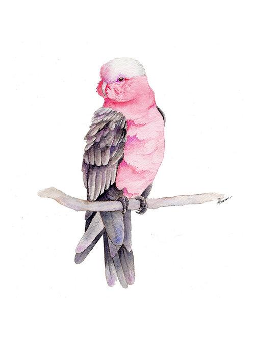 Original - Australian Pink Galah