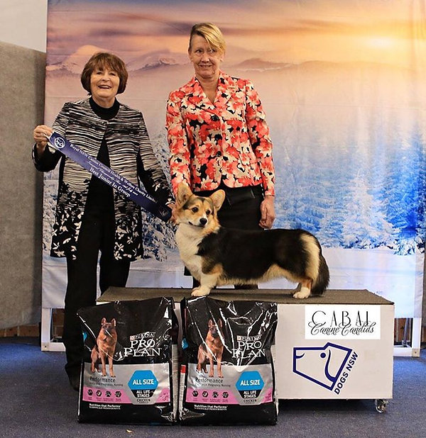 Our girl Lulu won best working dog in th
