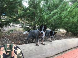 Puppies exploring
