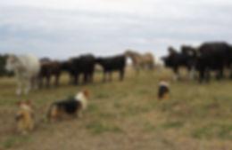 herding1.jpg