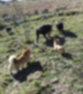 herding3.jpg