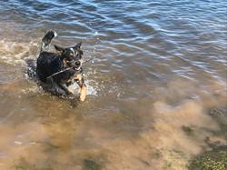 Lucy enjoying the dam