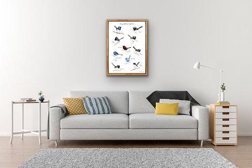 PRINT - Fairy Wrens of Australia