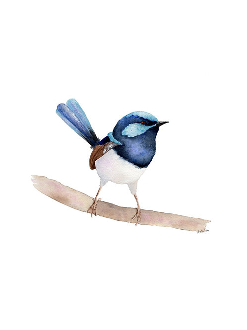 Original - Superb Fairy Wren