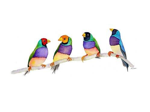 Original - Gouldian Finches