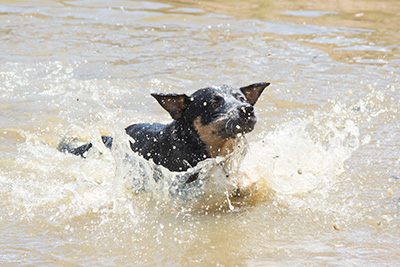 Bodie splashing in the dam
