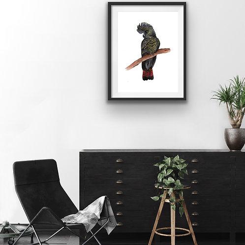 Giclee Print - Black Cockatoo