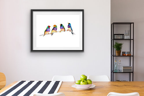 Giclee Print - Gouldian Finches