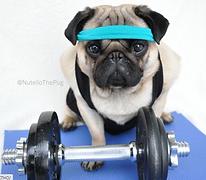 jenay fitness pug.png