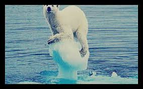 Polar Bear on ice flow Worldwide Breaking News