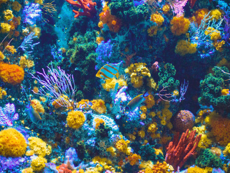 Beneath the Waves the Corals